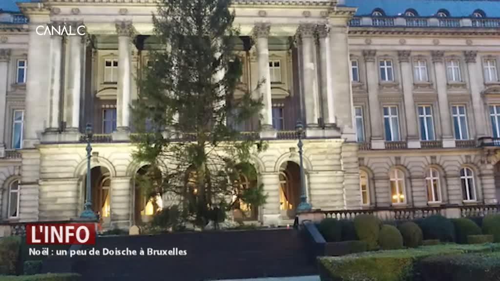 Le sapin du Palais Royal a été coupé à Doische