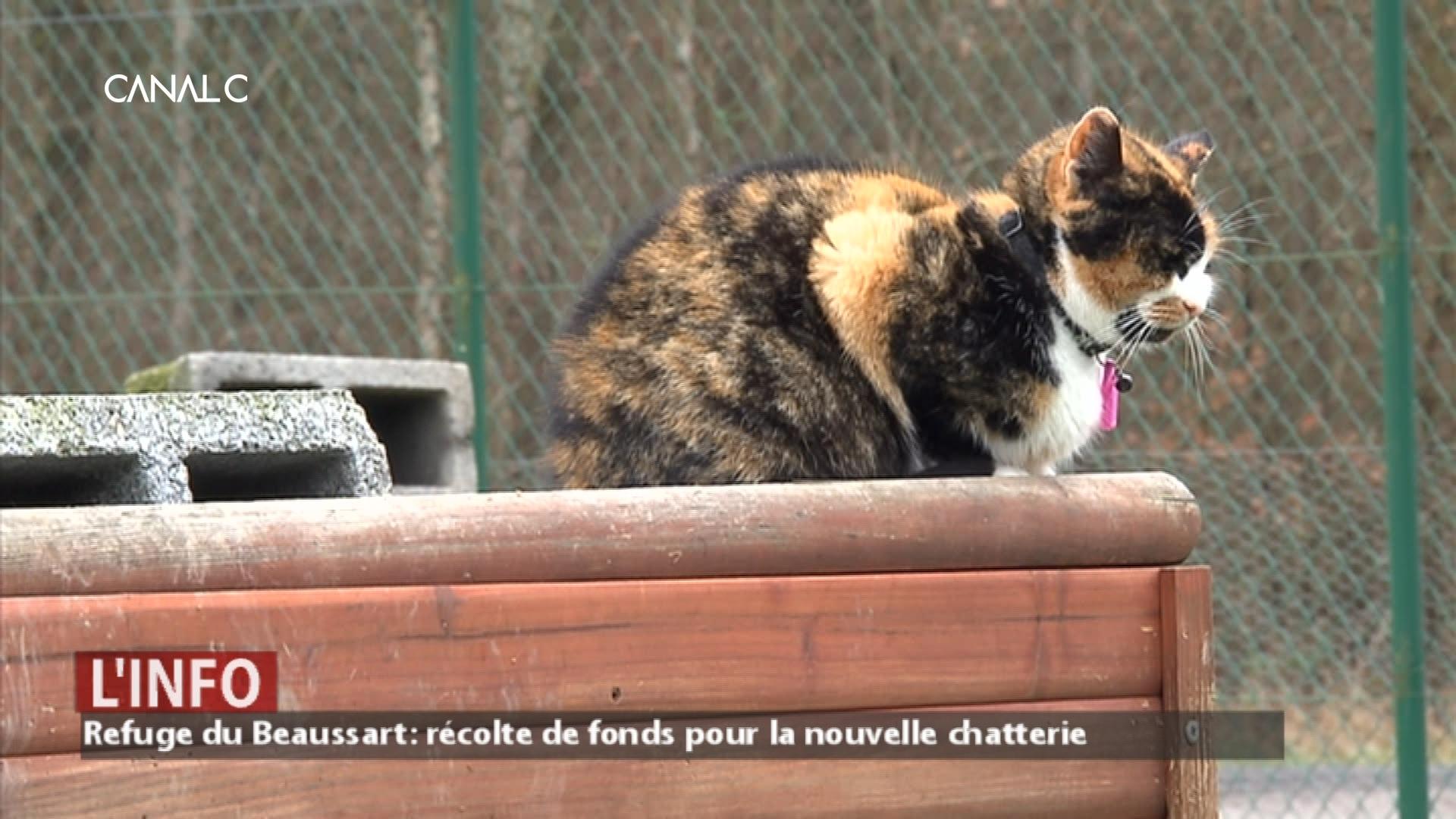 Bientôt une nouvelle chatterie au Refuge du Beaussart