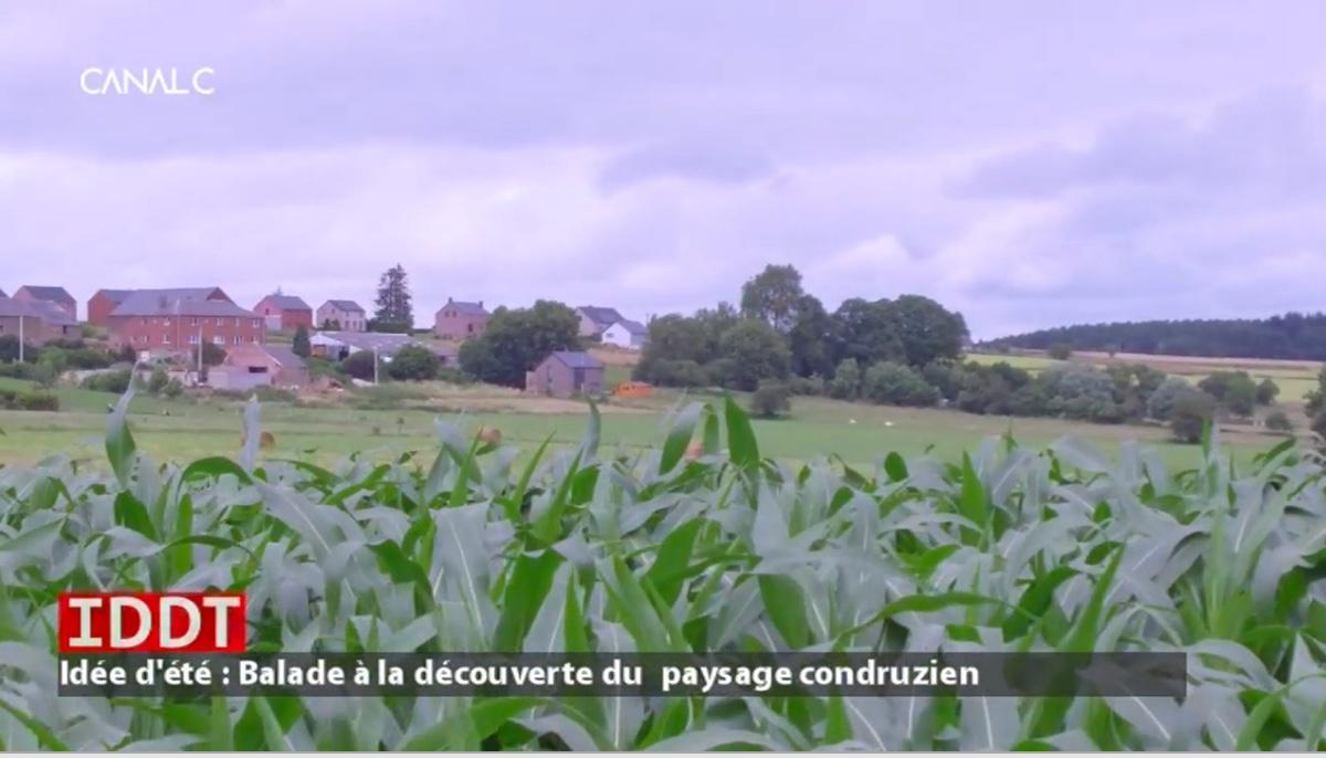 balade à la découverte du paysage du Condroz